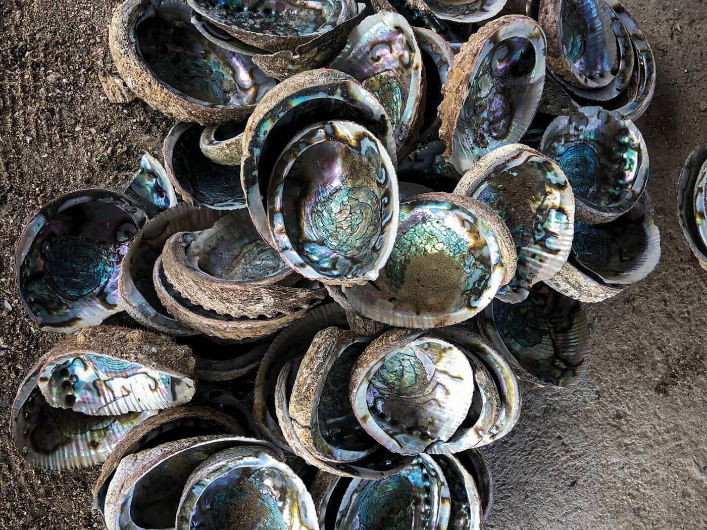 Bob taylor sustainably harvested abalone shells