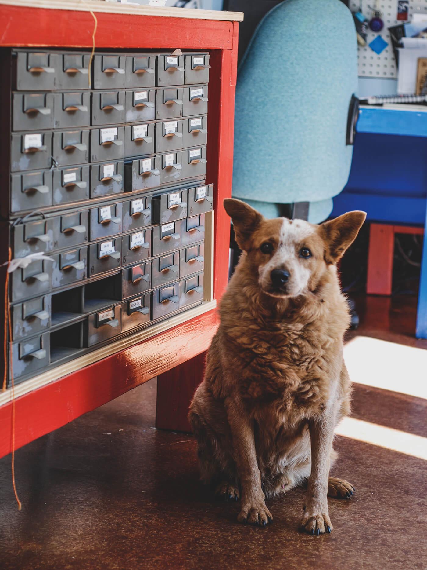 curtis novak pickups workshop dog