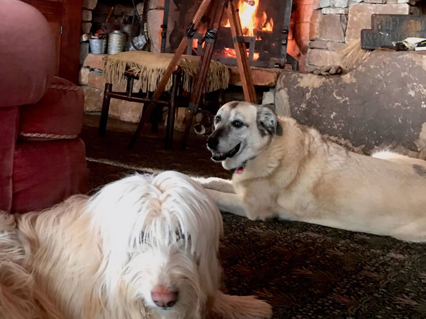 Neil Young's Fireside (and dogs)