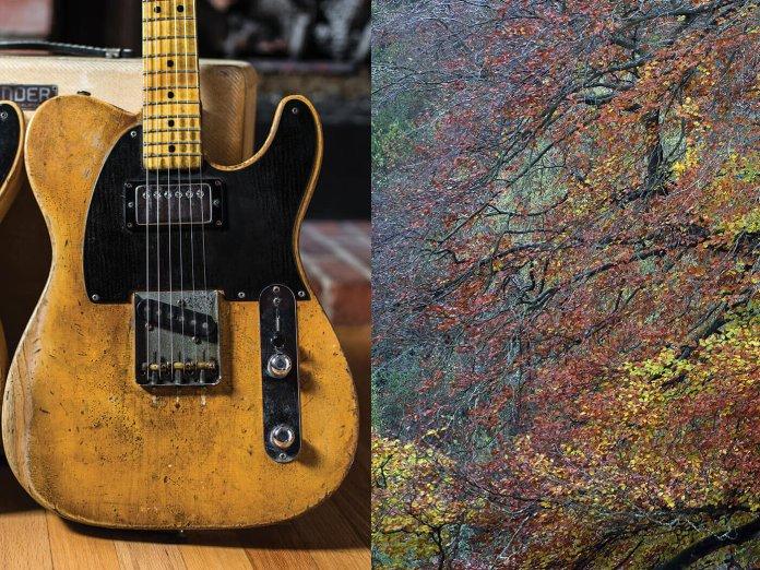 Fender guitar, + an ash tree