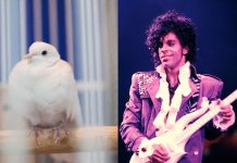 Prince and Divinity